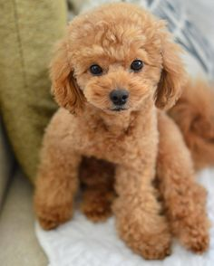 From @dogsloversclub ( IG ) #dog #dogs #dogsofinstagram #dogoftheday #doglover #dogstagram #doggy #doglovers #doglife #dogsoninstagram #dogtraining #dogslife #dogwalking #dogsarefamily #dogsloversclub #woof #bestwoof #mydog #ilovedogs #dogs_of_instagram #puppies #puppy #instapuppy #pup #lovedogs #dogstagram #instadogs #pets #animal #pet