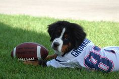 #Gronk the dog! #Patriots