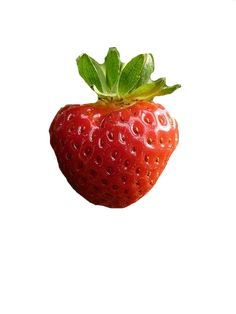 Post with 7615 votes and 9728 views. While the Americans are asleep, post high resolution photos of fruit! Strawberry Pictures, Strawberry Farm, Strawberry Sauce, Botanical Art, Botanical Illustration, Food Png, Coffee Stock, Fruits Images, Still Life Drawing