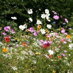 Prairie fleurie Les fleurs de l'été : Passion 3m².1 achetée = 1 offerte