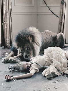 The lion hadn't killed her, he had protected her as long as he could.