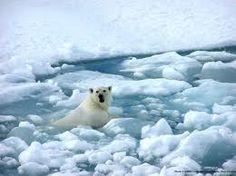 climate change - Google Search