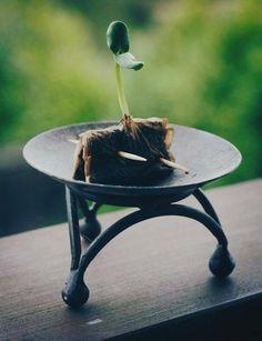 Repurpose used Tea Bags as seed starters | Применяем использованные чайные пакетики для проращивания семян #handmade #art #design
