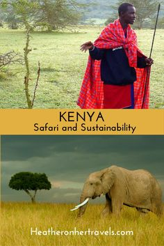 Read about Safari and Sustainability in Kenya