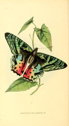 v. 3, c1833 - v1 - Zoological illustrations, or, Original figures and…