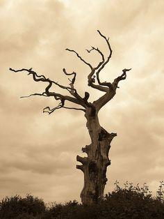 Dead tree by Peter Ashton aka peamasher, via Flickr