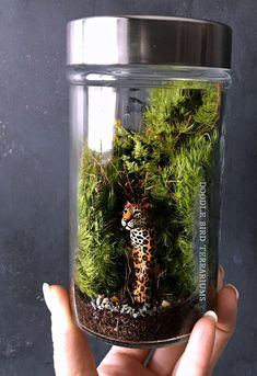 A densely planted jungle scene shows a realistic hand . - lamps Diy - A densely planted jungle scene shows a realistic hand … - Mini Terrarium, Terrarium Scene, Terrarium Plants, Succulent Terrarium, Terrarium Ideas, Jungle Scene, Succulents In Containers, Terraria, Plant Care