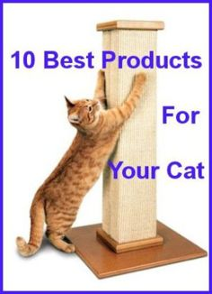 10 Best Products For Your Cat - Sold On Amazon