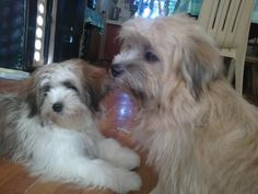 My Pachang & Amaya.