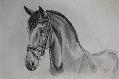 portret tekeningen van een paard