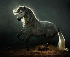 Beautiful animal - love the light on the mane! *****************************************  by wojtek kwiatkowski - Pixdaus #horse #horses