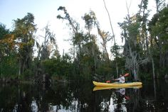 Kayaking the Honey Island Swamp with our guide AJ of New Orleans Kayak Swamp Tours! New Orleans Swamp Tour, Pearl River, Nature Activities, Mirror Image, Kayaking, Places To Visit, Wildlife, Tours, Island