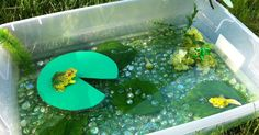 In honor of Spring, I created this pond/lifecycle of a frog sensory bin/small world play.   I used fishtank plants, as well as f...