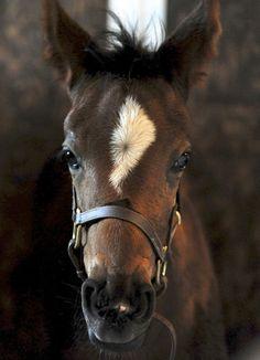 Second foal of 2012 #Horses #Foals