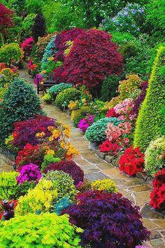 The beautiful flower garden.