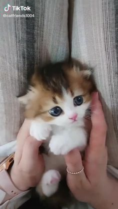 Cute Baby Dogs, Baby Animals Super Cute, Cute Little Kittens, Cute Little Animals, Cute Cats And Kittens, Baby Cats, Small Kittens, Newborn Kittens, Cute Cats Photos