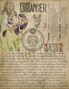 7 pages set about CANCER Astrological Sign Correspondences. They are an ideal addition to your own Wicca Book of Shadows. Astrology Zodiac, Astrology Signs, Astrological Sign, Cancer Astrology, Zodiac Cancer, Astrology Numerology, Numerology Chart, Magic Herbs, Herbal Magic