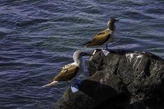 Galápagos, elegidas como las mejores islas del mundo según viajeros   ANDES