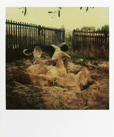 Andrei Tarkovsky. POLAROIDS from the book Instant Light: Tarkovsky Polaroids from Thames and Hudson.