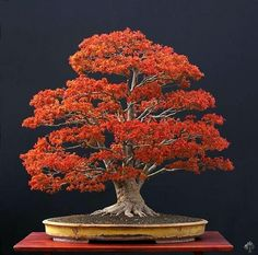 Bonsai gallery - Bonsai Empire