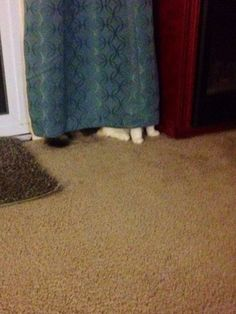 Cats that think they're hiding... Lol