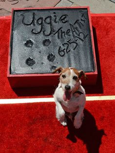 'The Artist's' Uggie Becomes First Dog to Leave Pawprints at Grauman's Chinese Theatre