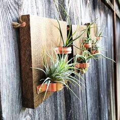 Set of Three Hanging Wood Plaques with Copper Holders and Six Air Plants Hanging air plant plaques w Hanging Air Plants, Indoor Plants, Plant Wall, Plant Decor, Types Of Air Plants, Plant Ladder, Air Plant Display, Air Plant Terrarium, Vertical Gardens
