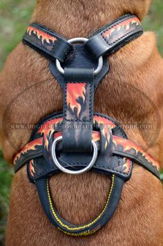 Exclusive training harness for Dogue de Bordeaux breed with wide chest plate Leather Harness, Leather Dog Collars, Dog Harness, Training Collar, Training Your Dog, Couture Cuir, Bordeaux Dog, Led Dog Collar, Dog Muzzle