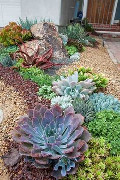 jardin sec contemporain aménagé avec des plantes succulentes et des graviers