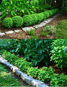 Pistou basil border and White Stars Feverfew border on bottom