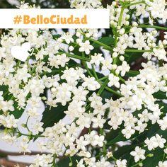 BelloCiudad #NestorLeon Bellisima, Floral Wreath, Wreaths, Plants, Home Decor, Cities, Floral Crown, Decoration Home, Door Wreaths