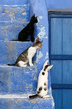 Cats and kittens in Chefchaouen Morocco / blue door / blue stairs #Morocco #Kittens #BlackCats