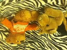 Here's the thing teddy bears and stuffed digs just don't go together!