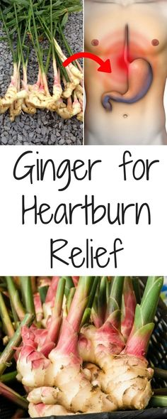 Greater than 60 million Americans have heartburn as well as acid reflux at least once a week. Try these heartburn natural remedy for instant heartburn relief.