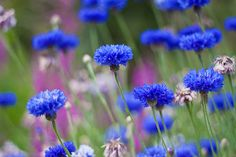 plants   Gardenwise Blog