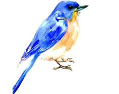Bluebird Original watercolor painting 12 X 9 in by ORIGINALONLY