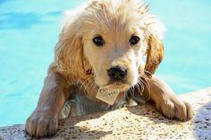 swimmer dog ... ooohhhhhh