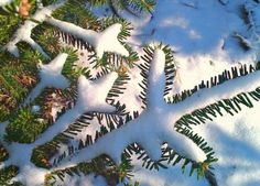 Winter ~ Solstice Tree ~ Blessing