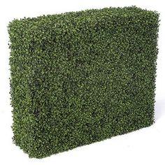 5 Sided Boxwood Hedge