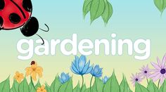 Happy Spring Everyone! Last week we asked Lensmasters which themes they'd love to see on Squidoo and today we released the first one. The Gardening Theme is perfect for garden lenses, flower lenses, gardening tools, homeschooling lessons and just about...