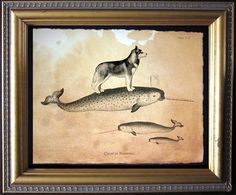 8 x 10 Husky on a Narwhal.