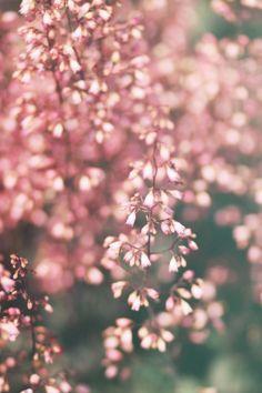 Flowers - Morgane LB