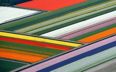 Tulip Fields in Europe Are Where You Should Celebrate Spring | Travel   Leisure