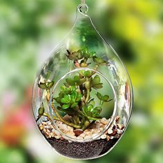 Teardrop Design Hanging Clear Glass Globe Ornament / Artificial Succulent Plant Display Terrarium Vase ** Trust me, this is great! Click the image. : Christmas Decorations