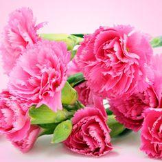 Carnation Fragrance Oil   #scent #scents #fragrance #fragranceoils #homesmellsgood