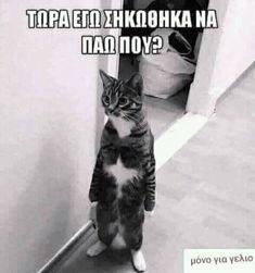 Funny Cat Memes, Haha Funny, Funny Cats, Lol, Funny Greek Quotes, Greek Words, Good Morning, Jokes, Humor