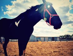I don't like horses, but I like this photo.