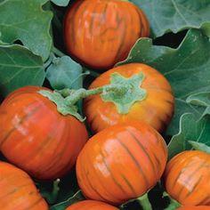 """Tennis-ball-sized fruit is very sweet, never needing to be salted!"" | Turkish Orange Eggplant Seeds"