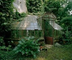 Overgrown Victorian conservatory/greenhouse in the United Kingdom