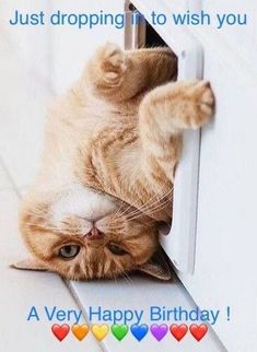 """101 Funny Cat Birthday Memes - """"Just dropping in to wish you a Very Happy Birthday!"""" birthday cat 101 Funny Cat Birthday Memes for the Feline Lovers in Your Life"""